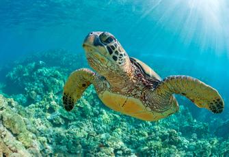 Морской Национальный парк Ватаму